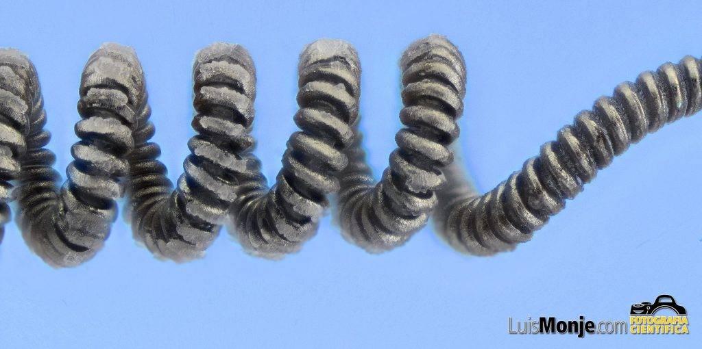 Fotomacrorafia de apilamiento del filamento de wolframio de una bombilla de incandescencia