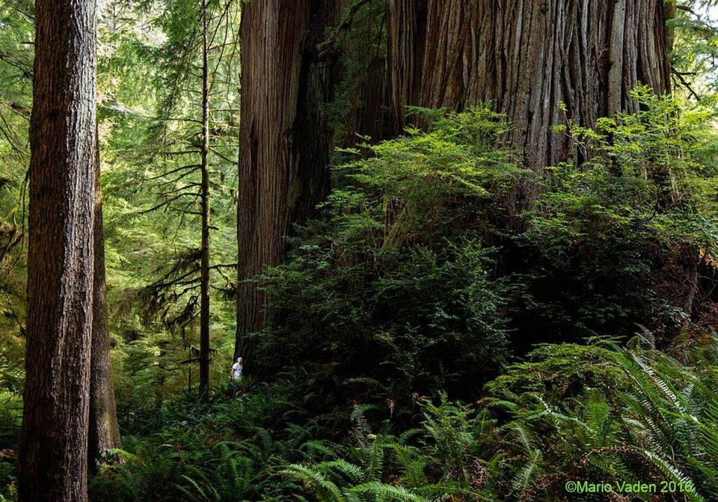 Uno de los árboles cercanos al Hyperión