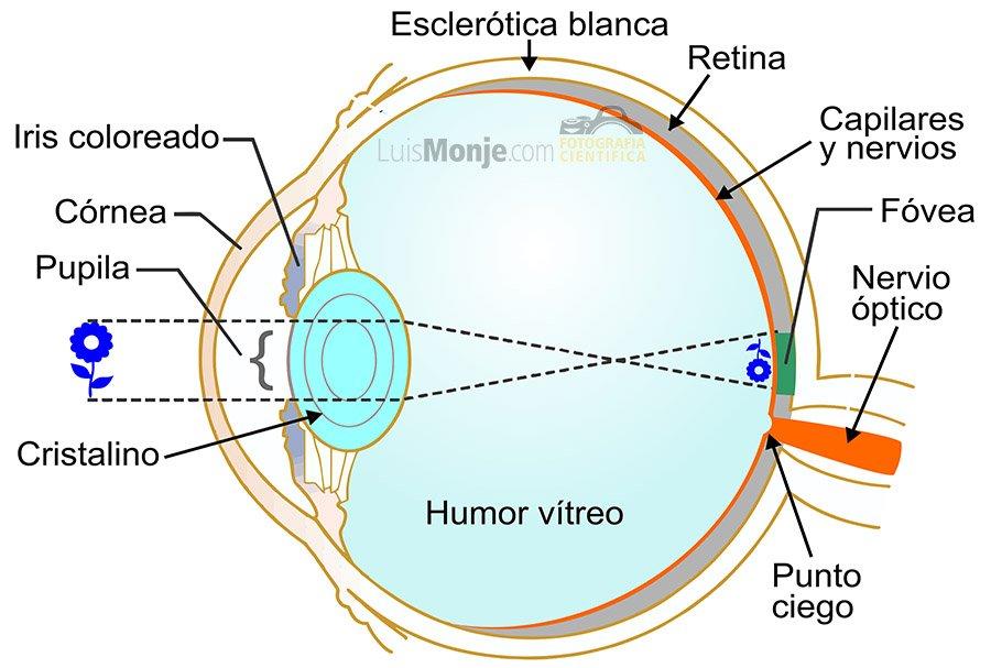 Luis Monje. Fotografía CientíficaCuriosidades del ojo humano I - Luis Monje. Fotografía Científica