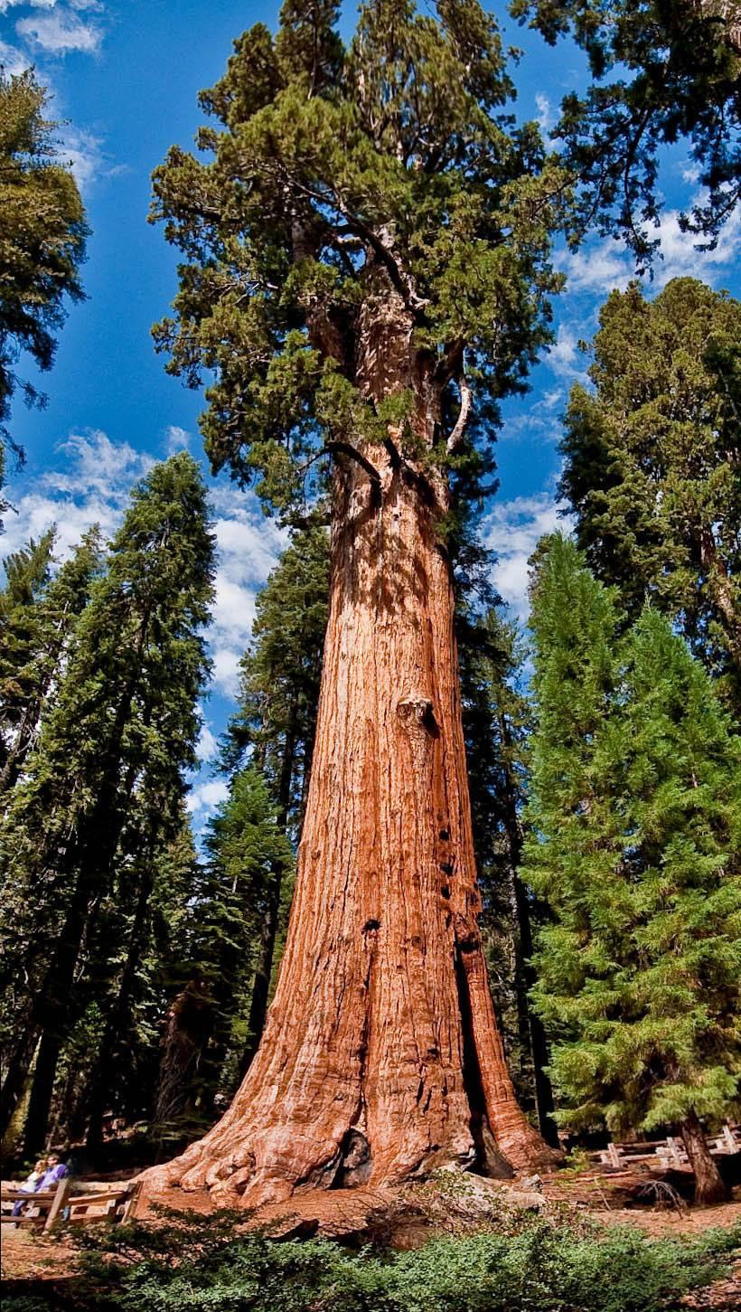 Luis Monje. Fotografía CientíficaBotánica II: El árbol más