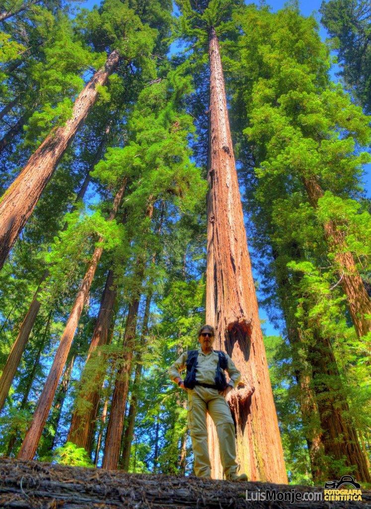 El autor ante una de las gigantescas sequoyas del Redwood National Park
