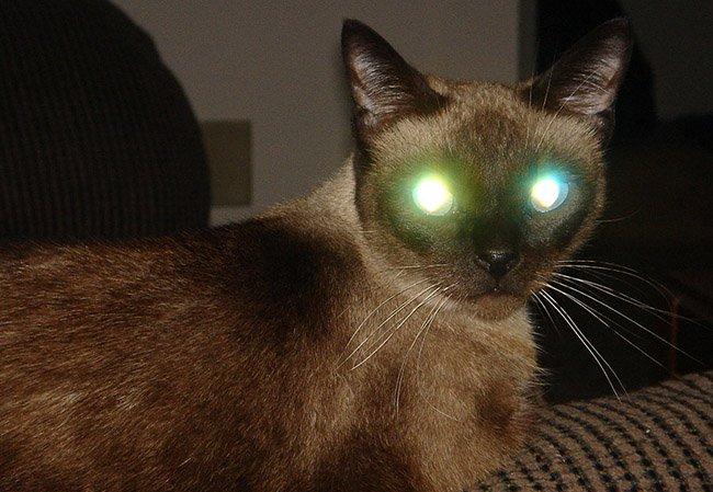 Ojos rojos gato